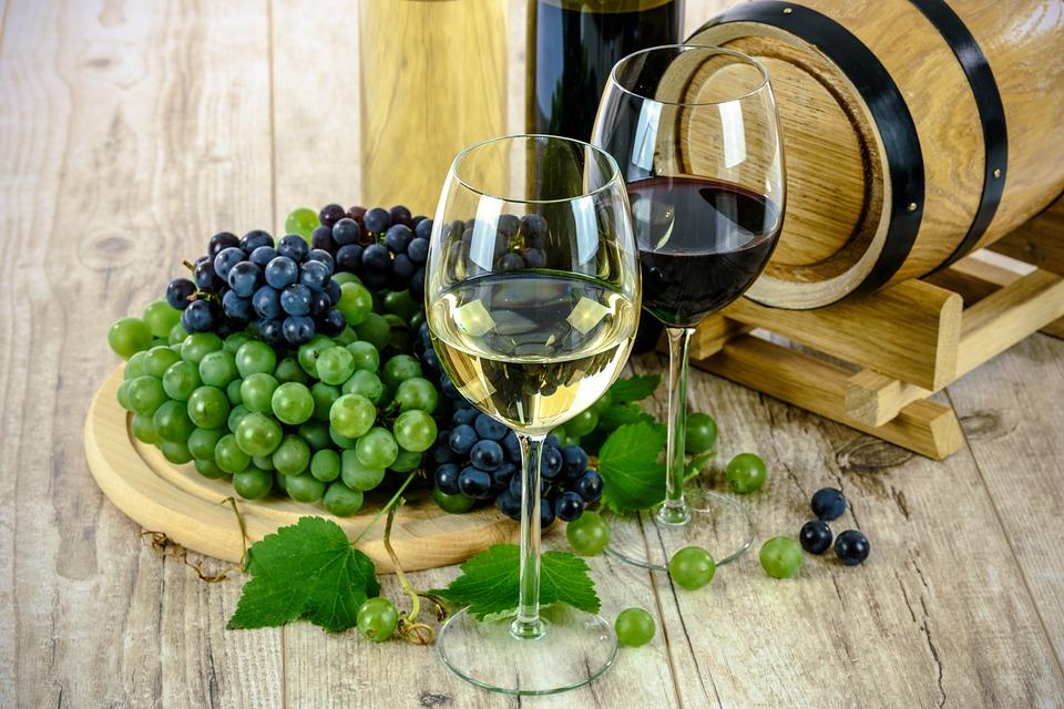 Valoriser et promouvoir la filière vinicole Bio et Biodynamique